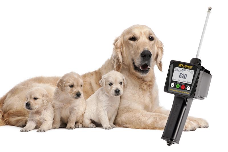wykrywanie owulacji u psów cieczki rui terminu krycia suk psów najlepsza metoda cicha ruja badanie progesteronu kiedy